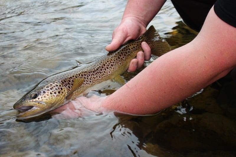 Les pluies compliquent l'ouverture de la pêche à la truite