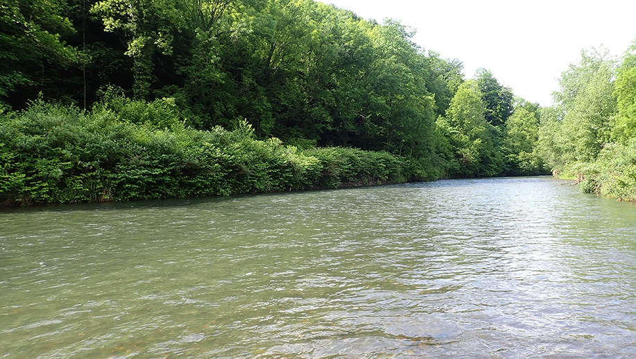 le Vert rivière du haut béarn dans les Pyrénées-Atlantiques